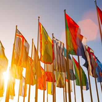 International and global studies