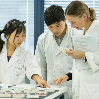 Bridging courses in biology, chemistry and physics